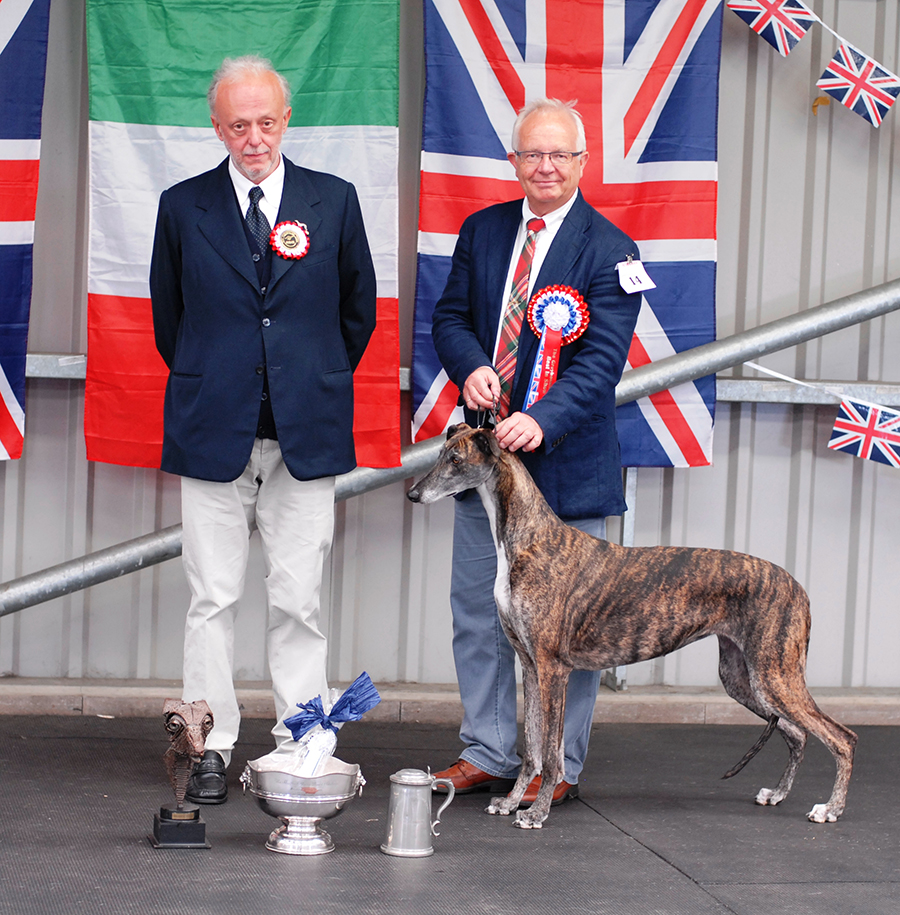 Sara BIS The Greyhound Club 2012 with trophies